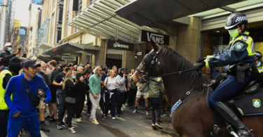punched police horse at Sydney